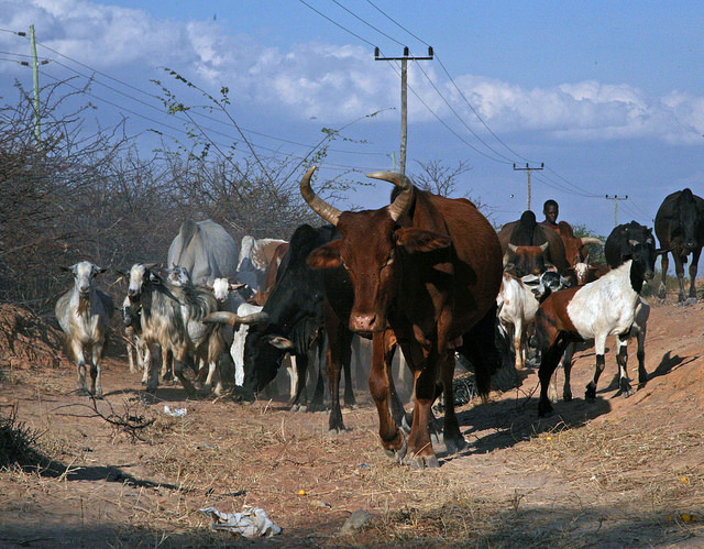 NEWS | PRISE working paper: Deconstructing a pastoralists' network to evaluate climate adaptation in the sector