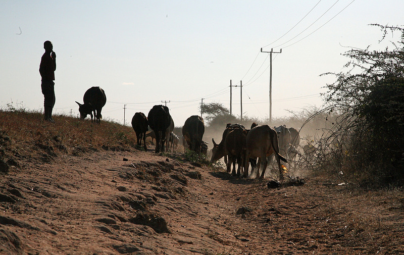 NEWS | PRISE Journal article: Trade-offs for climate-resilient pastoral livelihoods in wildlife conservancies in the Mara Ecosystem, Kenya