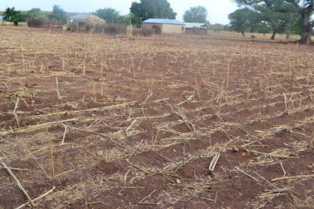 A farm vulnerable to prolonged drought in Northern Ghana